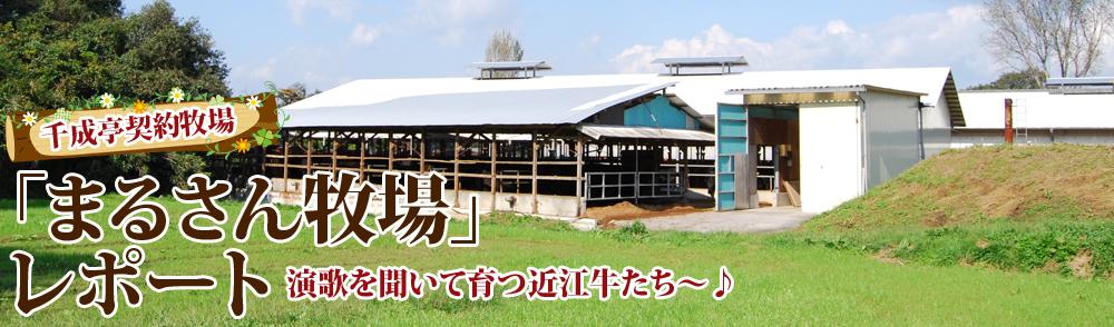 「まるさん牧場」レポート 演歌を聞いて育つ近江牛たち~♪